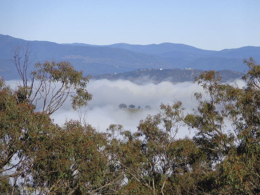Canberra Mist 5