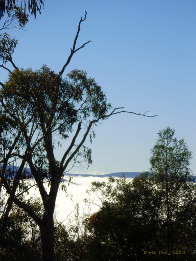 Canberra Mist 6