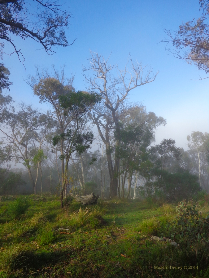 Canberra Mist 7