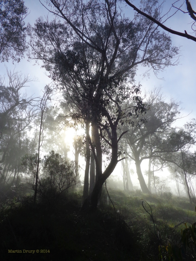 Canberra Mist 9