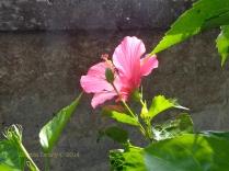 Alam Jiwa 19