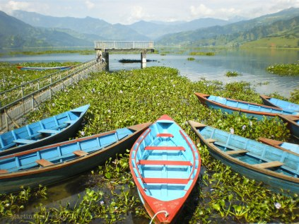 Boats on Lake Phewa