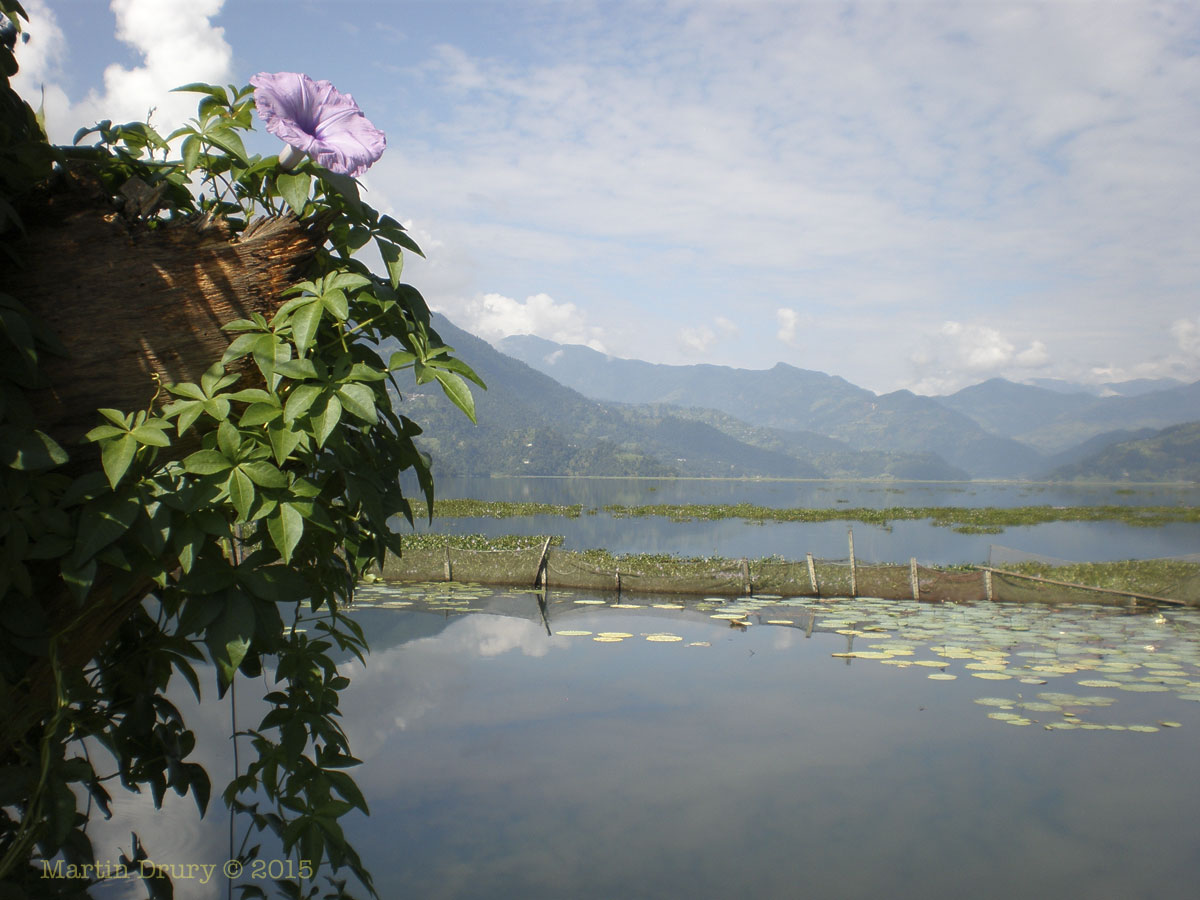 essay about pokhara Pokhara is a piece of heaven in the world there are many beautiful and interesting places to visit in nepal, outside the kathmandu valley pokhara is one of the most scenic and exciting valley in nepal.
